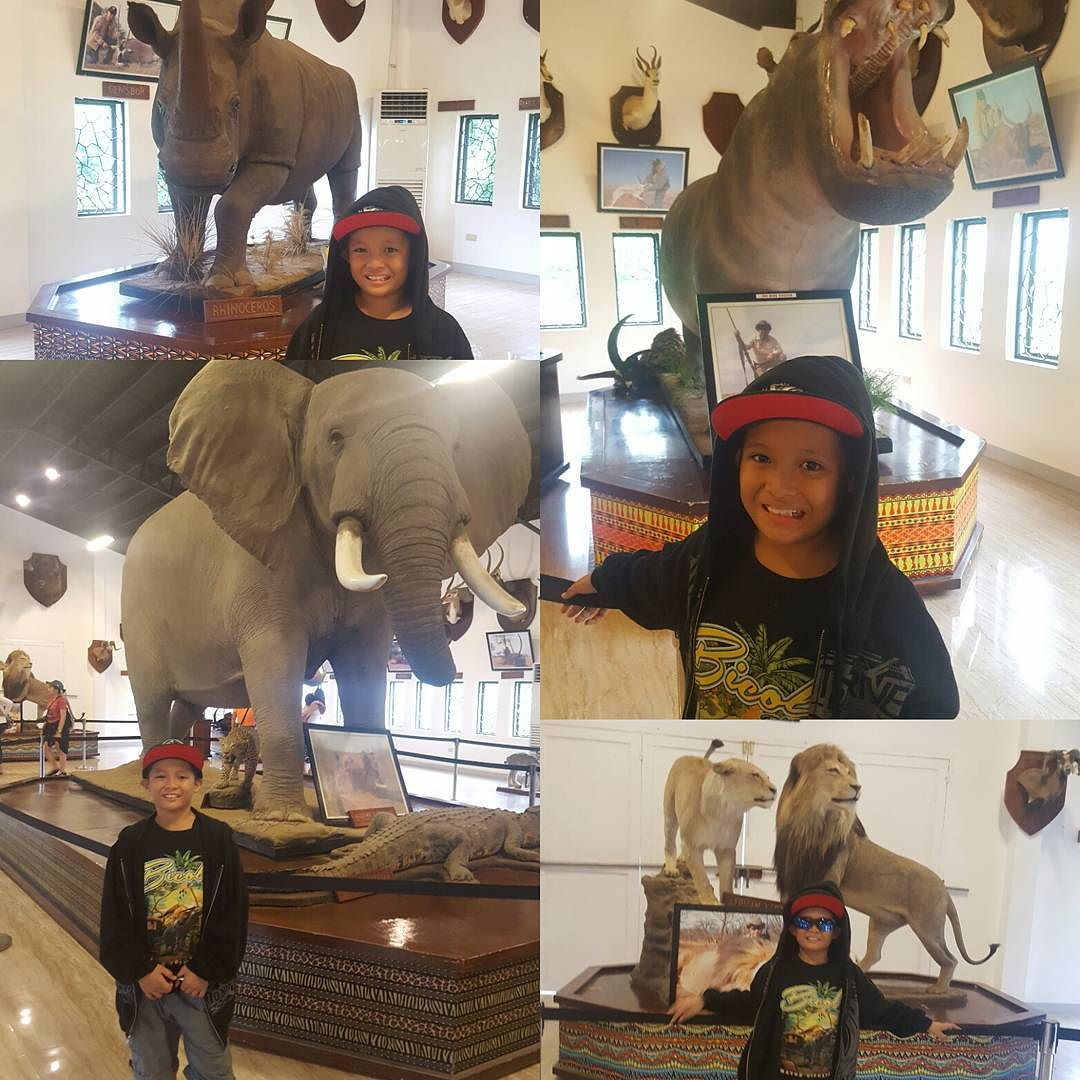Jolo At Safari Gallery Museum